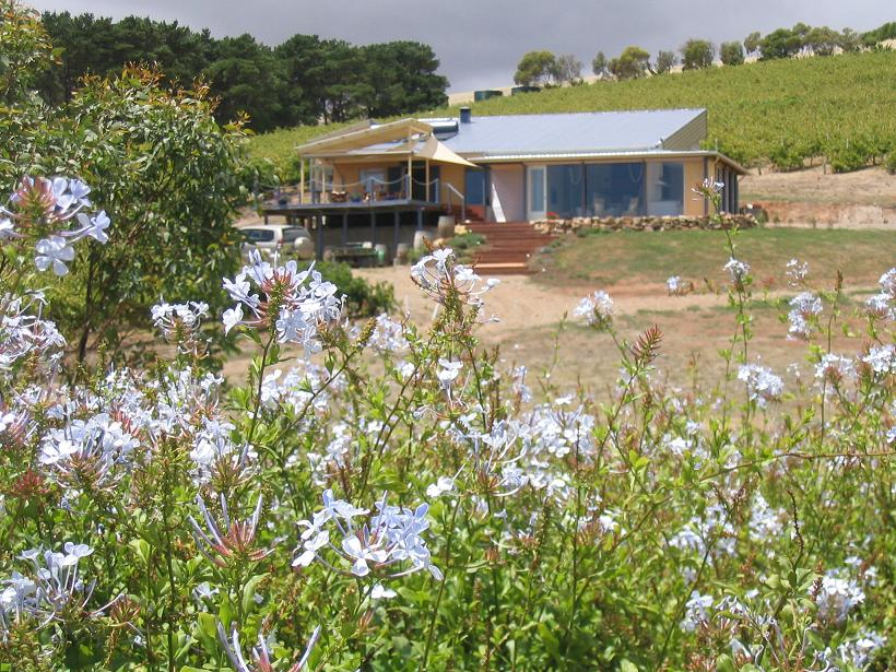 The Blue Grape Vineyard Accommodation - Accommodation Melbourne