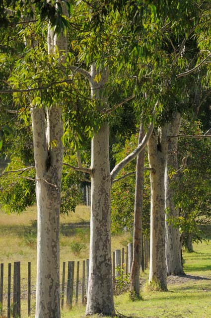 Stringybark Cottages - Accommodation Melbourne