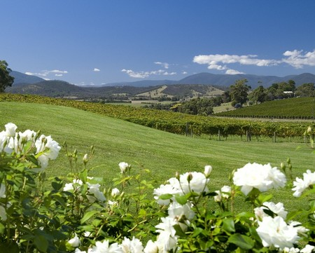Balgownie Estate Vineyard Resort and Spa - Accommodation Melbourne