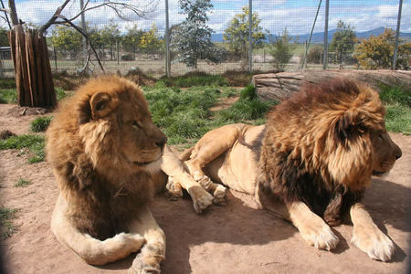 Mansfield Zoo - Accommodation Melbourne