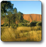 Uluru - Kata Tjuta National Park - Accommodation Melbourne
