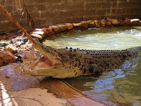Wyndham Zoological Gardens and Crocodile Park - Accommodation Melbourne