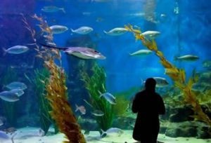 Melbourne Aquarium - Accommodation Melbourne