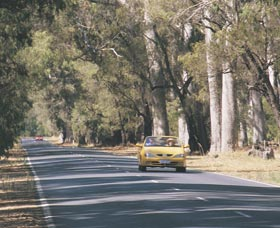 Ludlow Tuart Forest - Accommodation Melbourne