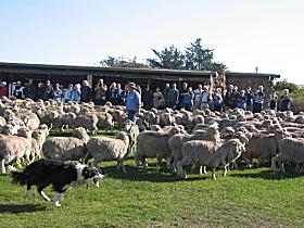 Curringa Farm - Accommodation and Farm Tours - Accommodation Melbourne