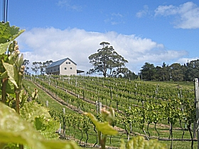 Bruny Island Premium Wines Bar and Grill - Accommodation Melbourne
