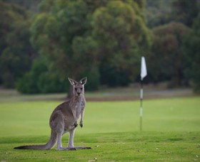 Anglesea Golf Club - Accommodation Melbourne