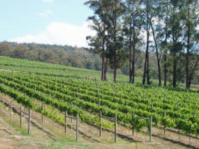 Piedmont Vineyard - Accommodation Melbourne