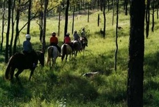 Hunter Valley Horse Riding and Adventures - Accommodation Melbourne