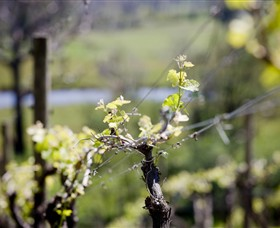 Mountainside Wines - Accommodation Melbourne