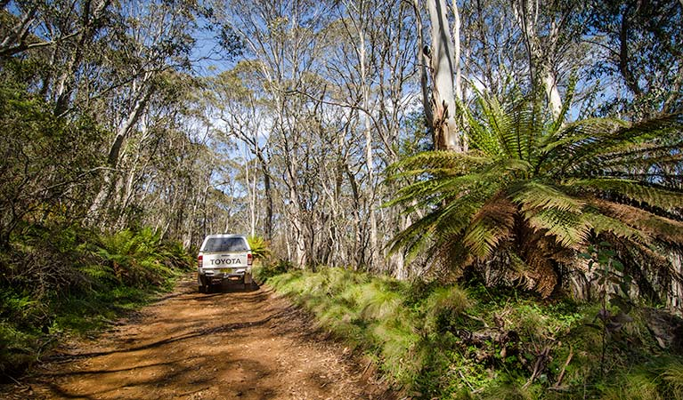Barrington trail - Accommodation Melbourne