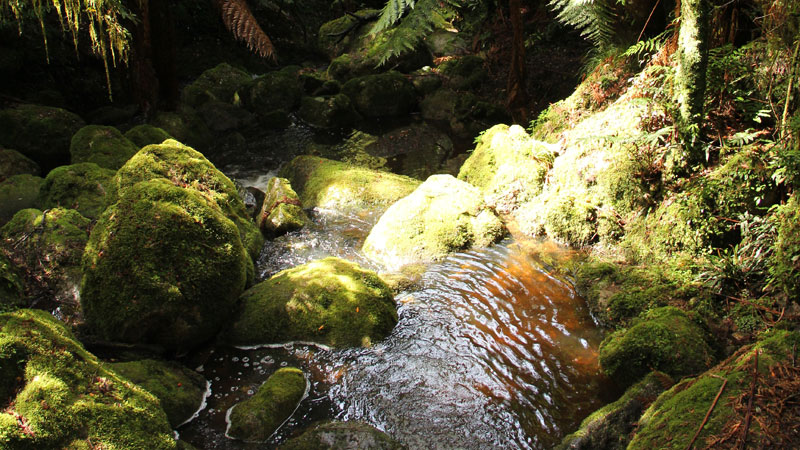 South East Forests National Park - Accommodation Melbourne