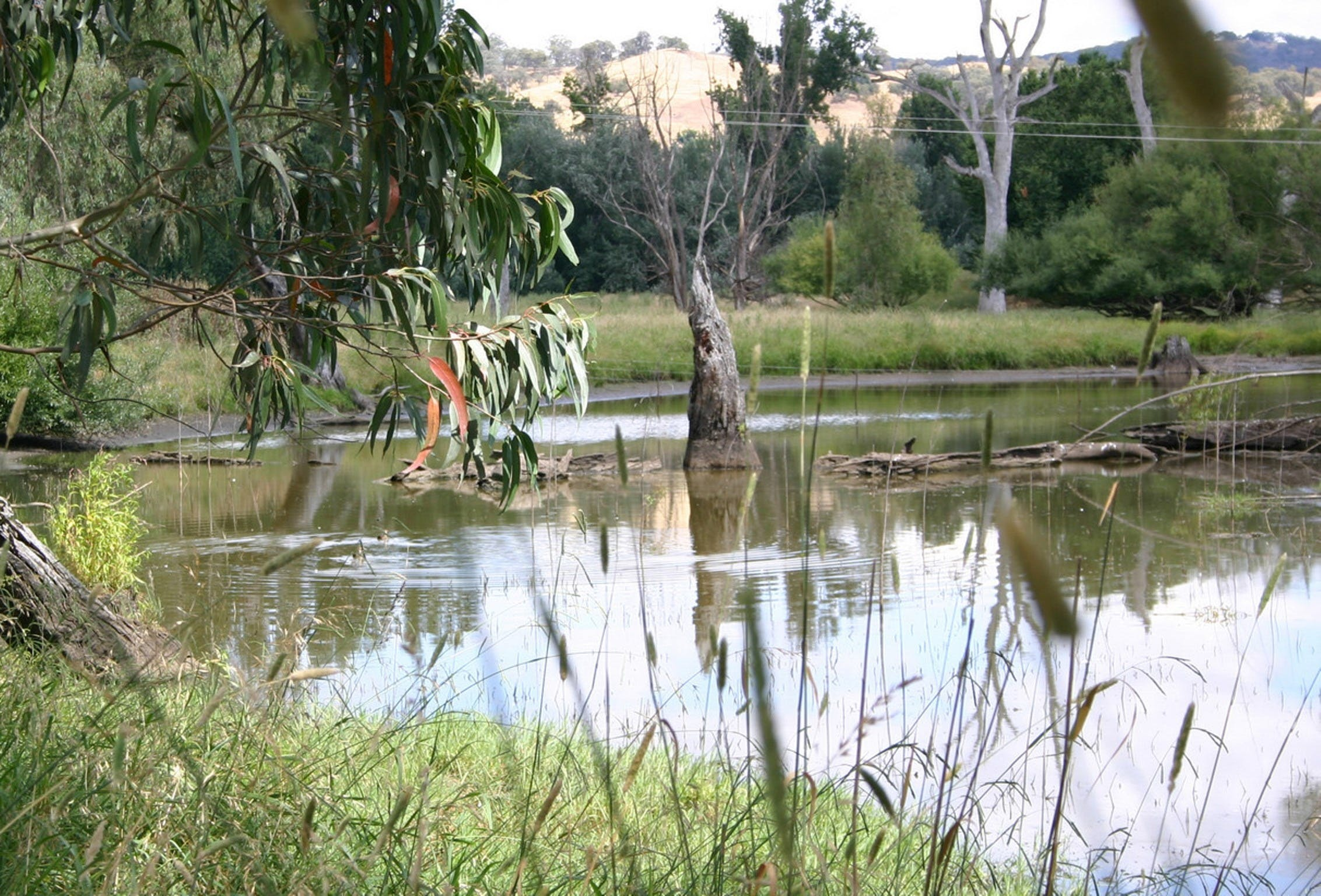 Tumut Wetlands - Accommodation Melbourne