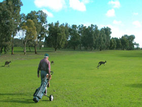 Coffin Bay Golf Club - Accommodation Melbourne