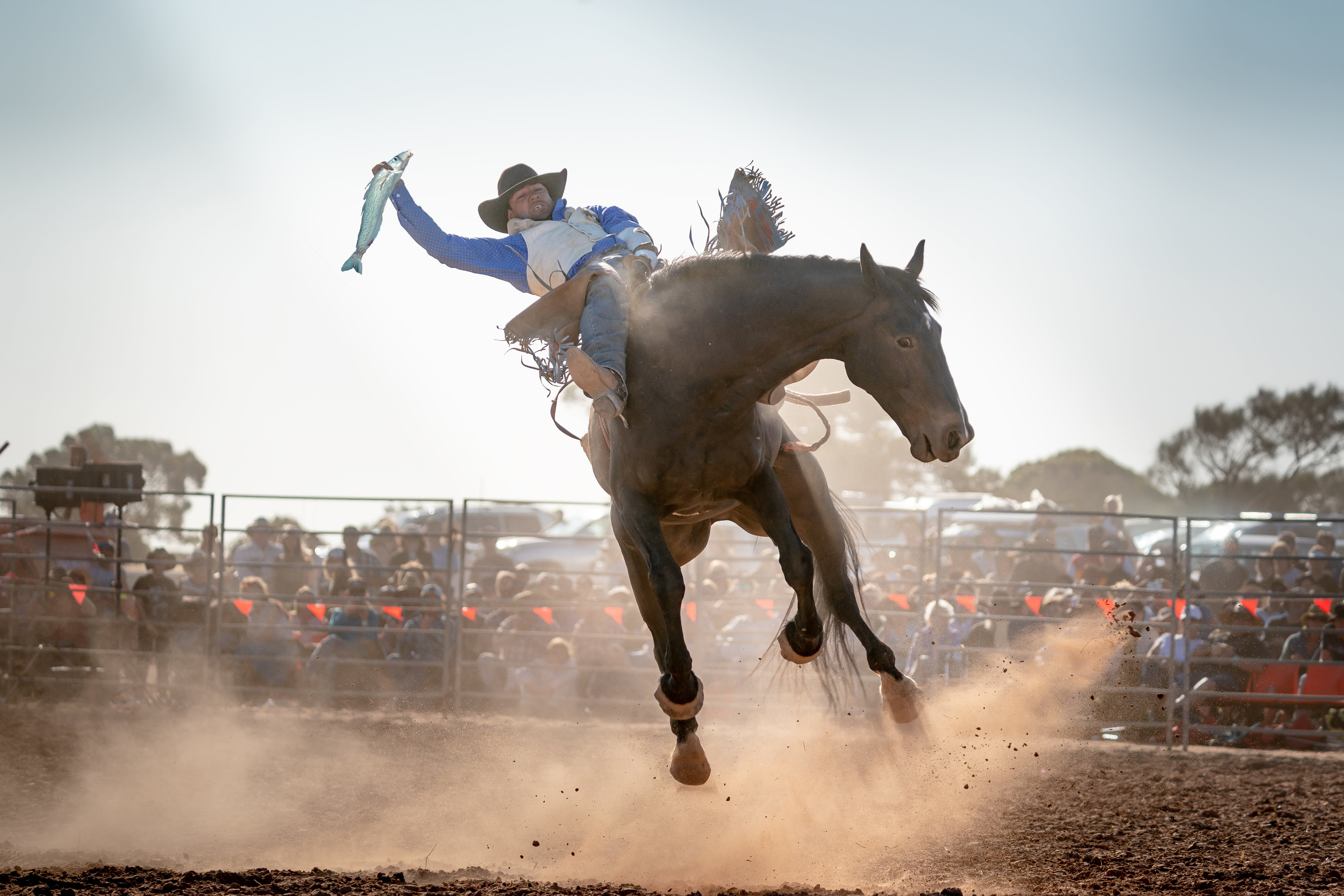 Rodeo by the Sea - Streaky Bay - Accommodation Melbourne